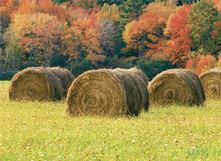 Many kinds of hay seed and baler twine. Fence post, wire, electric fence supplies are available at Paul's TIre, Inc Carrollton, KY